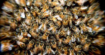 La Cour de justice : une ruche pour les abeilles